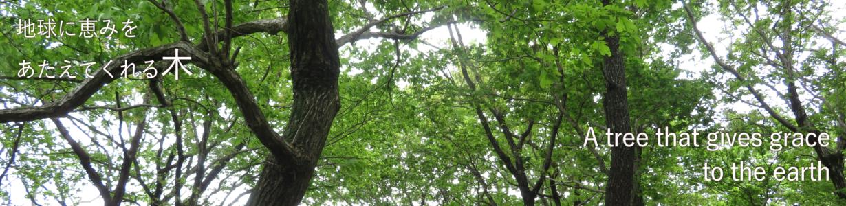 category Tree