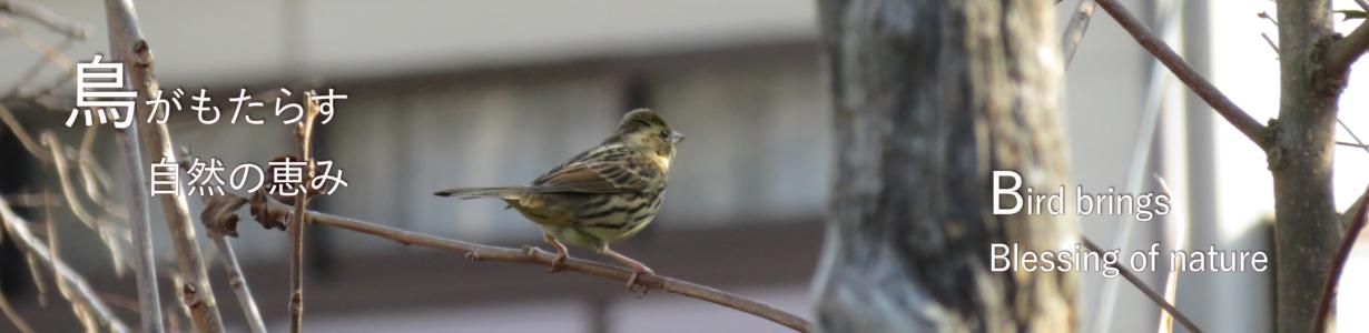 category Bird