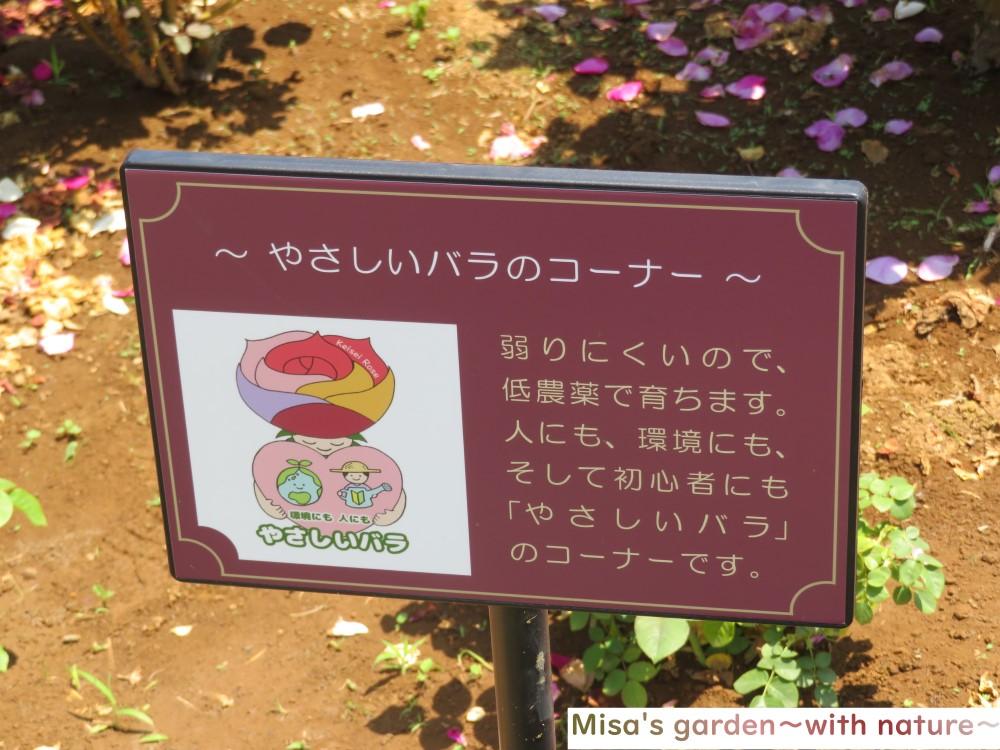 京成バラ園 やさしいバラのコーナー