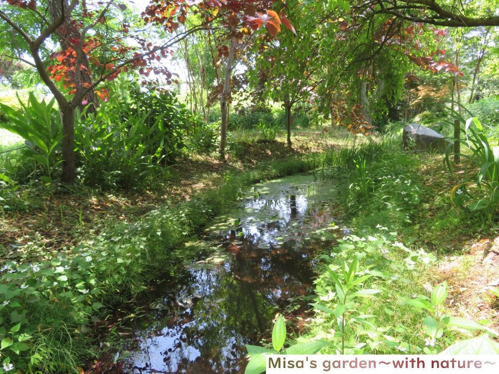 京成バラ園 湧き水