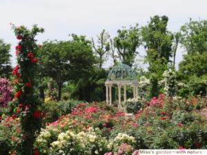 京成バラ園 由美のガゼボとエデンの鐘