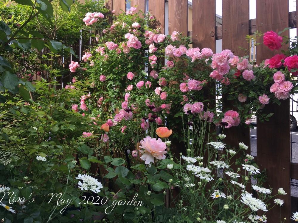 駐車場奥の花壇