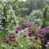ボランティア募集 - 佐倉草ぶえの丘バラ園 The City of Sakura Rose Garden